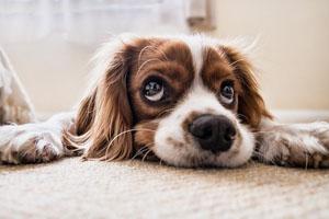 meine trauer kongress hund