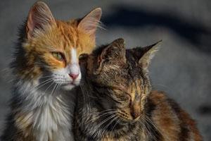 meine trauer kongress katzen
