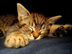 ´gesunder schlaf nach milch
