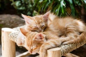 gesunder schlaf katzen