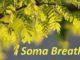 soma breath